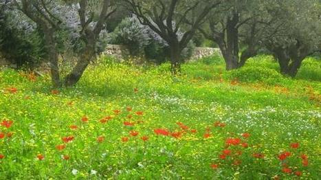 Les principaux lieux Saints de Jérusalem. | Ma vie est un long fleuve tranquille ... | Scoop.it
