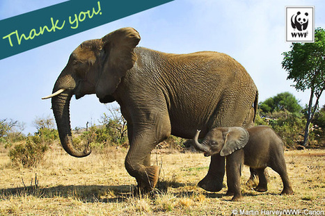 Send a Postcard to an Elephant Ranger | World Wildlife Fund | Life on Earth | Scoop.it