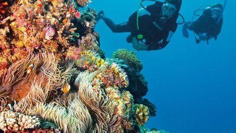 13 family-friendly dive sites for your kids - Fox News | DiverSync | Scoop.it