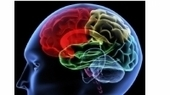 Fear can be erased from the brain before its memory has been formed | Happiness & wellbeing | Scoop.it