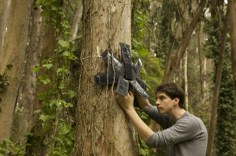 Des portables au secours des arbres !   1jour1actu.com - L'actualité à hauteur d'enfants !   News in the French class   Scoop.it
