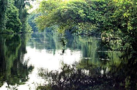 The Best Amazon Jungle Trips | Bookmarking | Scoop.it