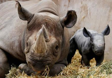 The Devastating Rhinoceros Slaughter Continues in South Africa | Biodiversity IS Life -- Conservation,Ecosystems,Wildlife,Rivers,Water,Forests | Scoop.it