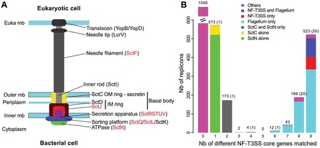 The Non-Flagellar Type III Secretion System Evolved from the Bacterial Flagellum and Diversified into Host-Cell Adapted Systems | microbial pathogenesis and plant immunity | Scoop.it