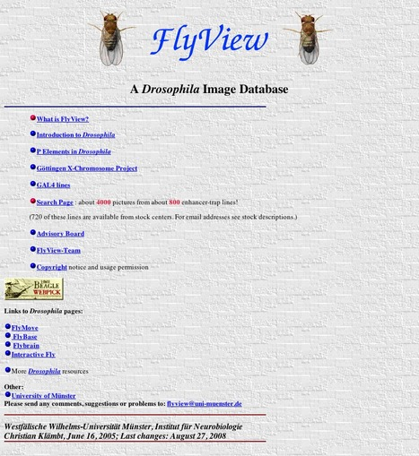 FlyView - a Drosophila image database | bioinformatics-databases | Scoop.it