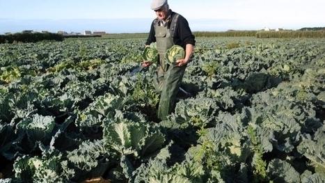 Les légumes ne délivrent pas les mêmes bienfaits selon l'heure | Bien-être | Scoop.it