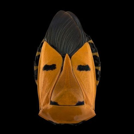 These Macro Photos of Colorful Insects Look Like Masked Faces | Backstage Rituals | Scoop.it