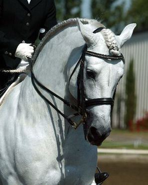 15 Braiding & Banding Jobs That Will Blow Your Mind | Horse And Rider World | Scoop.it