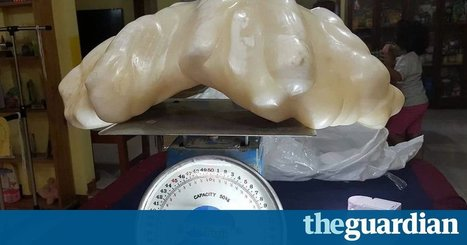 Fisherman hands in giant pearl he kept under the bed for 10 years | enjoy yourself | Scoop.it