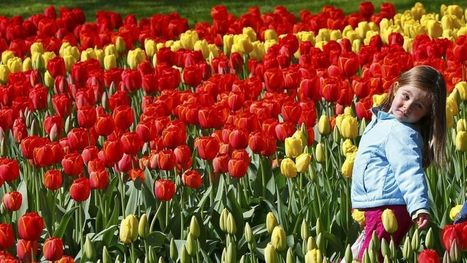 Aux Pays-Bas, les Jardins de l'Europe sont en fleurs | Espaces Verts | Scoop.it