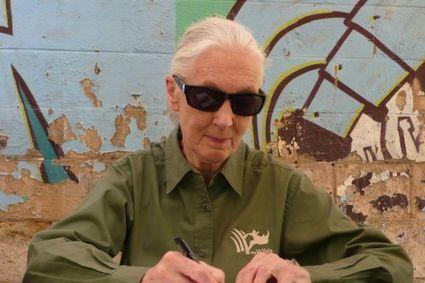 Exclu : « il faut donner de la valeur aux arbres », nous dit Jane Goodall   Nature, société et développement   Scoop.it