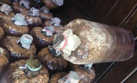 Indonesia: Entrepreneurship Education Through Mushroom Cultivation | Mushroom cultivation in The Third World | Scoop.it