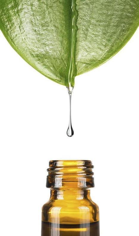 Le tea tree, reine des huiles essentielles | Confidences Canopéennes | Scoop.it