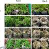 plant pathology, bacteria and plants