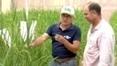 Brasil: Cultivos Inteligentes | Geoflorestas | Scoop.it