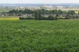 Les terres agricoles sont insuffisamment protégées - Courrier des maires   senscommuns   Scoop.it