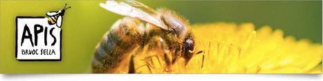 Qu'en est-il des hôtels à insectes ? | Les colocs du jardin | Scoop.it