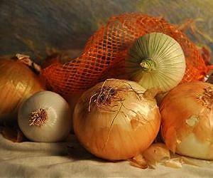 How onions recognize when to bulb | Sustain Our Earth | Scoop.it