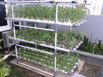 How To Make Easy Hydroponics at Home and Urban Farmer ~ Independent Agriculture | Vertical Farm - Food Factory | Scoop.it