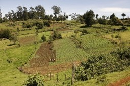 African agriculture 'Dirt Poor' but will inorganic fertilizer make it rich? | Agroforestry World Blog | Climate Smart Agriculture | Scoop.it