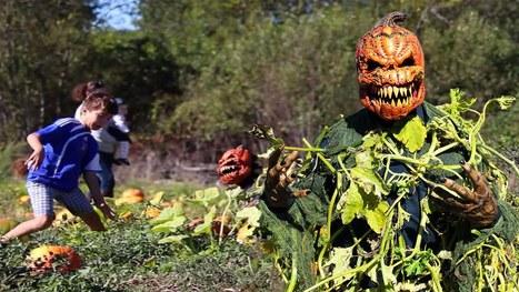 Pumpkin Patch Killer Prank | DailyVideosTV | Scoop.it