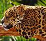 TV5MONDE- Les animaux racontent le changement climatique- Le buffle africain   Français 4H   Scoop.it