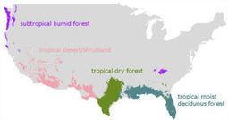 Model predicts how forests will respond to climate change  | Timberland Investment | Scoop.it