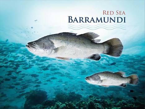 رواد الإستزراع الساحلي الصحراوي | المجموعة الوطنية للاستزراع المائي | National Aquaculture Group (NAQUA) | Scoop.it