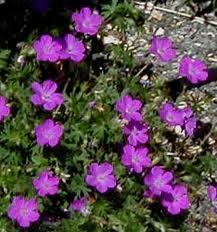 Use a ground cover to suppress weeds | Gardening Life | Scoop.it