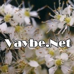 Ergeç sakalı hakkında herşey | vaybe.net | Scoop.it