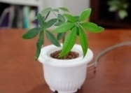 Cyborg houseplants can wave back at you-Who knows? Your ficus just might slap you in the face one day. | Cyborg Lives | Scoop.it