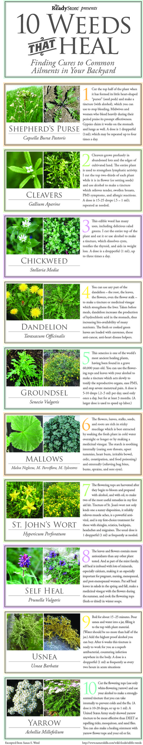10 common weeds that can heal you | orgasms | Scoop.it