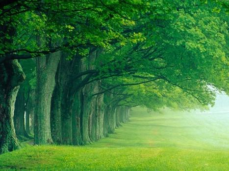 Los árboles también hacen relaciones sociales: Peter Wohlleben | Agua | Scoop.it