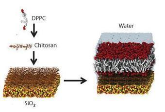 Artificial membranes form bio-silicon interfaces | biomimicry as design strategy | Scoop.it