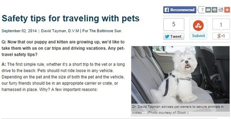 Traveling with Pets? Get Help from Auto Dealers for a Pet-friendly Car | Seaport Auto | Scoop.it