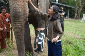 The Eyes of Thailand, A Documentary About Injured Thai Elephants & The Woman Who Helps Them | world-Documentary | Scoop.it