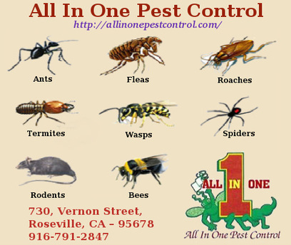 Best Pest Control in Sacramento | AllinOnePestControl.com | All in One Pest Control | Scoop.it