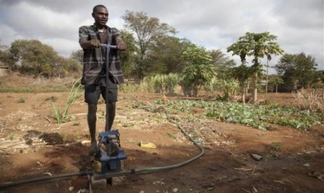 Enticing Africa's youth to agriculture - AlertNet / FANRPAN | Henna Bio Fence | Scoop.it