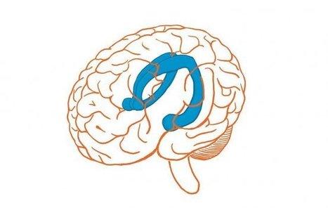 La parte derecha del cerebro manda en la integración de información   Noticias de ciencia y tecnología en EFEfuturo   Scoop.it