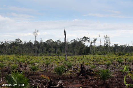 The challenge of trying to save Indonesia's forests   The Glory of the Garden   Scoop.it