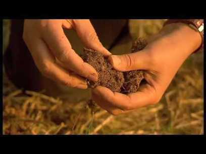 Claude et Lydia BOURGUIGNON, mort des sols = mo... | Cultiver la terre autrement | Scoop.it