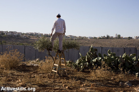 PHOTOS: Israel 'punishes' Ni'ilin activist, denies access to olive trees behind the wall | +972 Magazine | Occupied Palestine - In Photos | Scoop.it