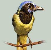 Bird Watching in Puerto Vallarta | The Joy of Mexico | Scoop.it