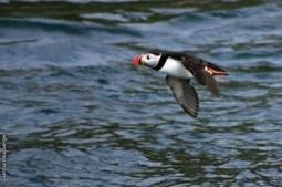 Les espèces de la faune bretonne menacées de disparition | L'environnement en Bretagne | Scoop.it
