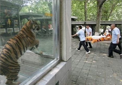 Tigers have feelings too -- | Off the beaten track: Kreativ und cool | Scoop.it