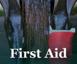 First Aid in Treating Equine Injuries | Horse Health Tips | Scoop.it