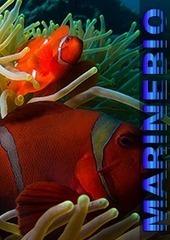 The Deep Sea ~ Ocean biology, Marine life, Sea creatures, Marine conservation... | Deep Ocean Biome | Scoop.it