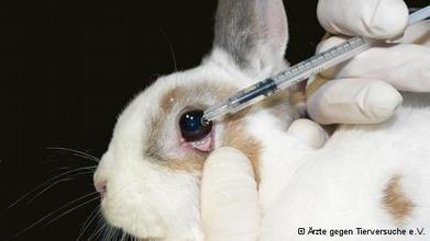 EU reaffirms ban on animal testing for cosmetics | Globalization | DW.DE | 11.07.2013 | Banning of Cosmetic Animal Testing | Scoop.it