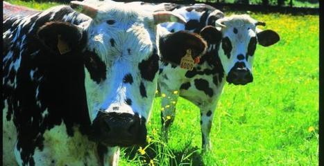 Agence Française pour le Développement et la Promotion de l'Agriculture Biologique - Agence BIO | SemioFood | Scoop.it