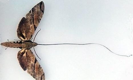 Réinventer l'écologie scientifique sans la dénaturer / Predictive ecology in a changing world | EntomoNews | Scoop.it